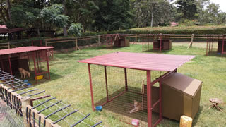 Shared dog compound, for socialising dogs