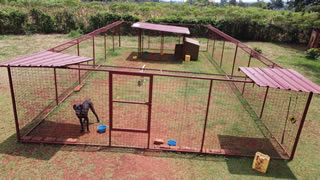 A solo compound for dogs that are not to be socialised