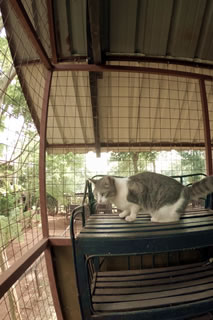 Nile Pet Boarding Cattery